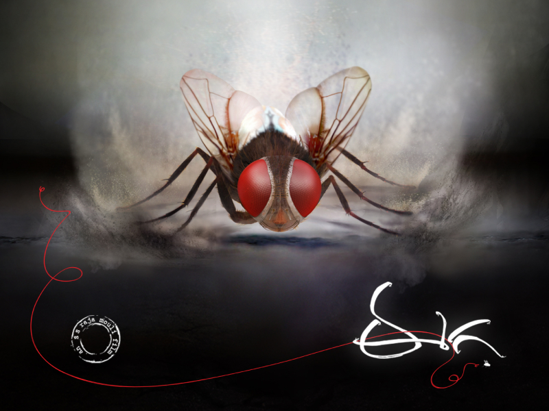Eega-Poster-Telugu-Poster-Half-05